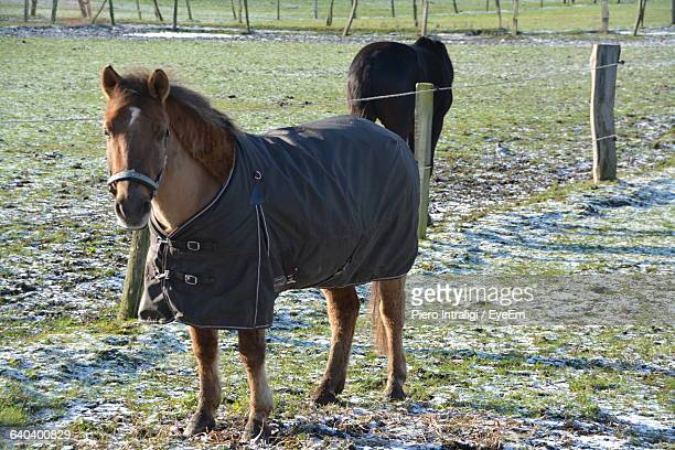 Horse Covered With Blanket On Field During Winter