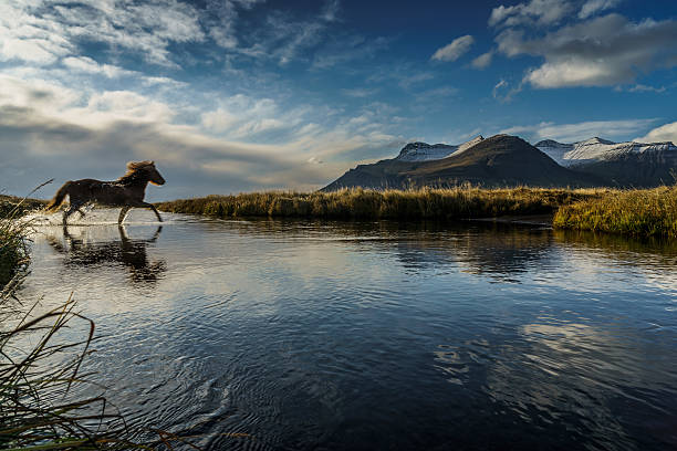 Horse Crossing A River, Iceland Wall Art