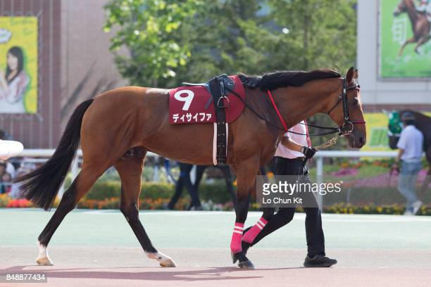 Horse Decipher being led around the paddock during Race 11 Sapporo Kinen at Sapporo Racecourse on August 20 2017 in Sapporo Hokkaido Japan