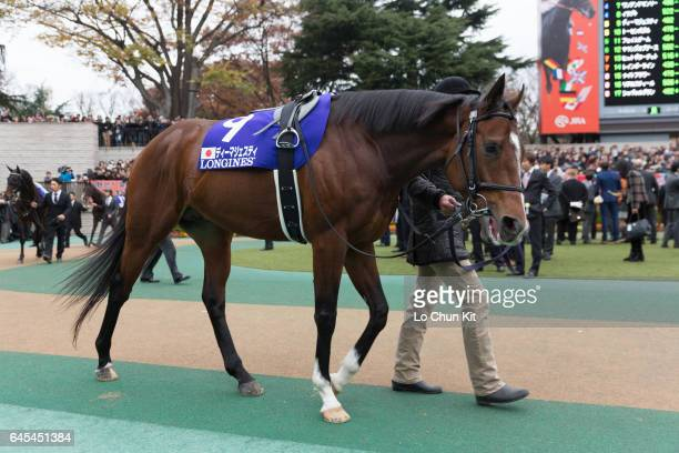 Horse Dee Majesty being led around the paddock during the Japan Cup at Tokyo Racecourse on November 27 2016 in Tokyo Japan