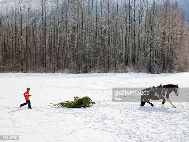 Horse Dragging Christmas Tree