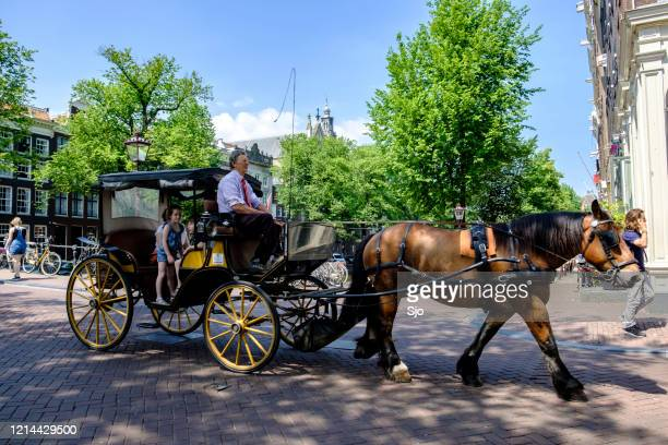 """horse drawn carriage driving tourists around over the canals in the city of amsterdam - """"sjoerd van der wal"""" or """"sjo"""" stock pictures, royalty-free photos & images"""