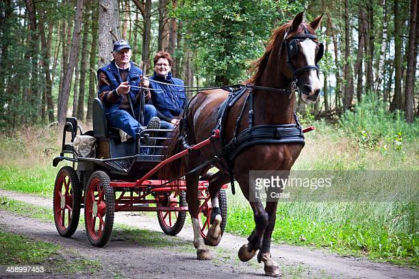horse drawn carriage - animal powered vehicle stock photos and pictures