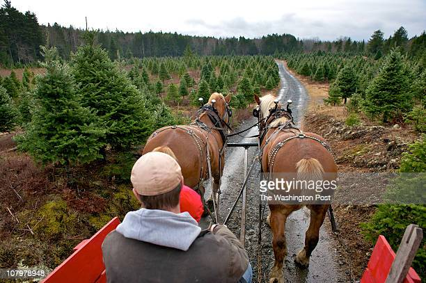 Horse drawn carriage takes visitors for a tour of the Balsam Fir trees at Kevin's UCut Christmas Tree lot