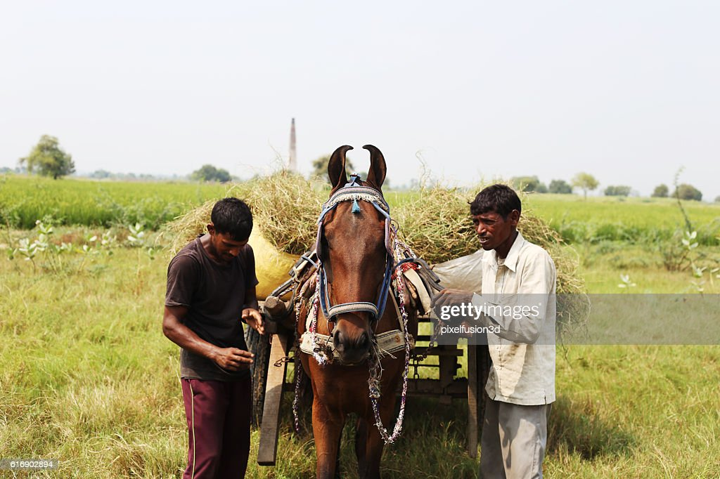Horse Drawn In Green Field : Stock Photo