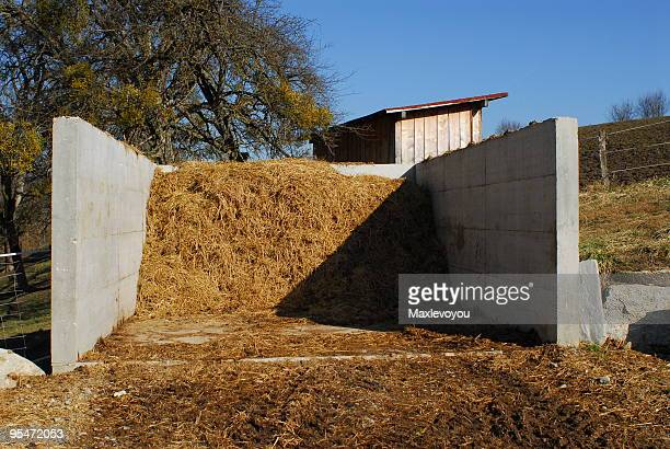 horse dung - ugly horses stock photos and pictures