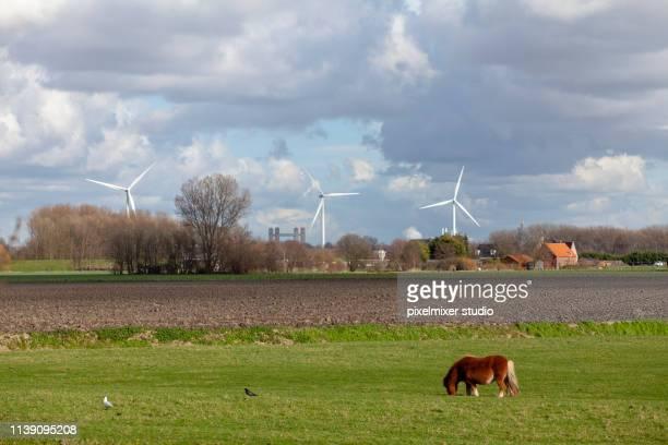 a horse eating grass in the field,netherlands - brille stock pictures, royalty-free photos & images