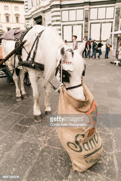 Horse Eating Hay in Florence, Italy