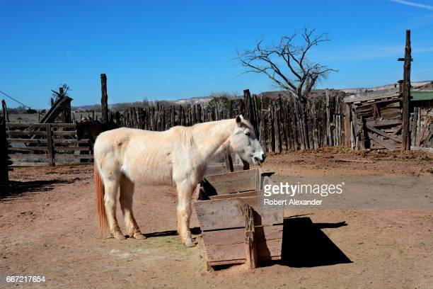 A horse eats hay at the Hubbell Trading Post National Historic Site in Ganado Arizona built by John Lorenzo Hubbell in 1878 to serve area Native...