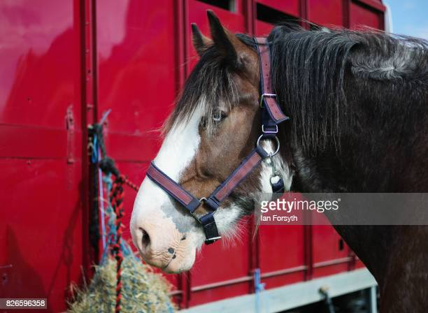 Horse eats straw as it is tethered to a horsebox during the Osmotherley Country Show on August 5, 2017 in Osmotherley, England. The annual show hosts...