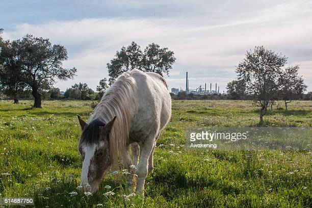 A horse eats with the Ilva industry on the background on March 10 2016 in Taranto Apulia Italy A national referendum on oil drilling brought about by...