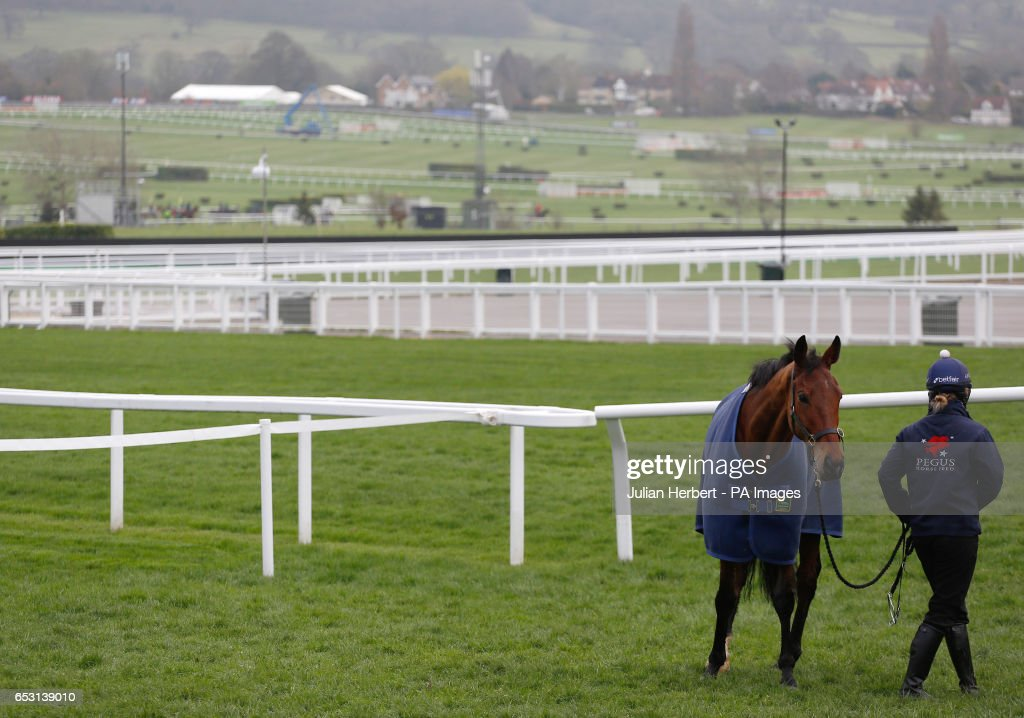 A horse enjoys a pick of grass after an early morning exercise session during Champion Day of the 2017 Cheltenham Festival at Cheltenham Racecourse.