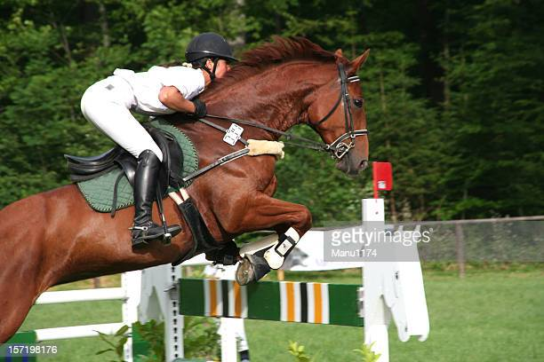 horse event - equestrian eventing stock pictures, royalty-free photos & images