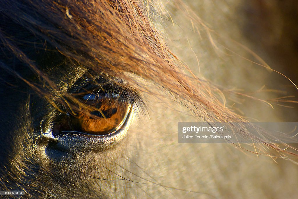Horse Eye Stock Photo   Getty Images