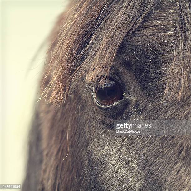 horse eye - morpeth stock pictures, royalty-free photos & images