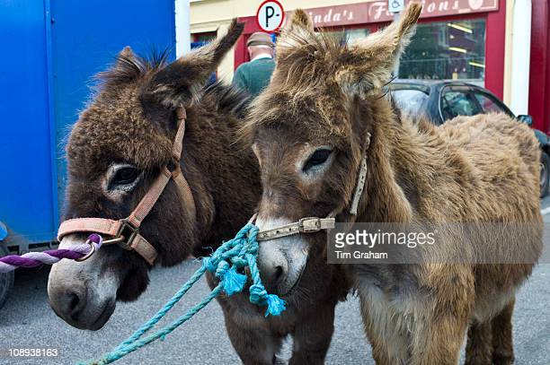 Horse fair in market square in Kilrush Co Clare Ireland Traditional for locals and travellers to trade horses and donkeys
