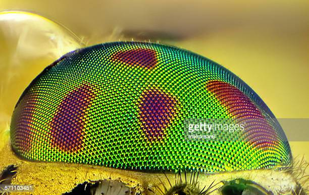 horse fly eye - bug eyes stock photos and pictures