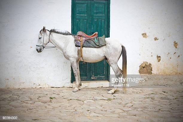 caballo de colombia - villa de leyva fotografías e imágenes de stock