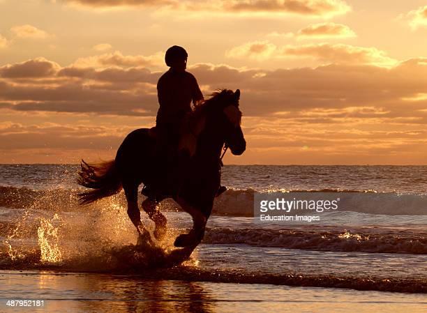 Horse galloping on the seashore Bude Cornwall UK