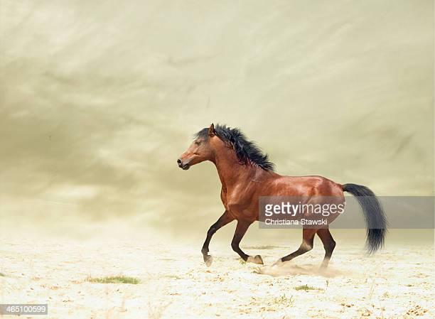 Horse galloping