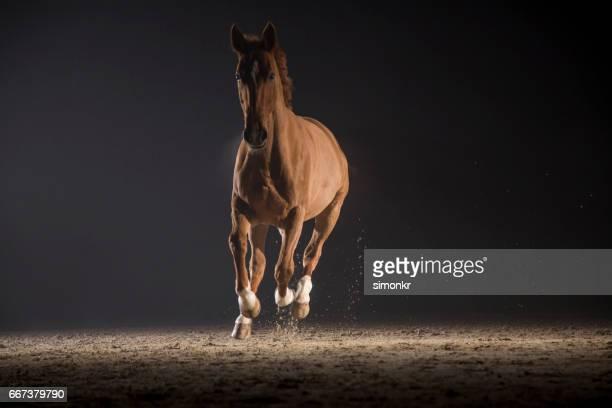 Cheval de galloping