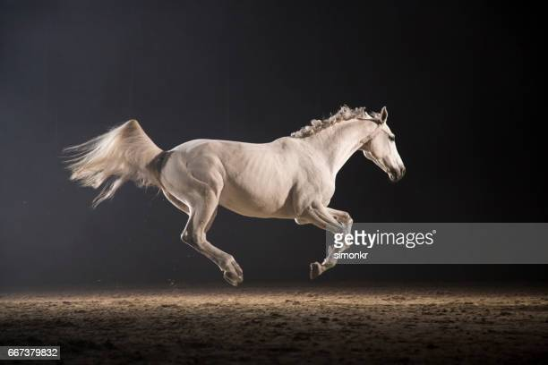 horse galloping - racehorse stock pictures, royalty-free photos & images