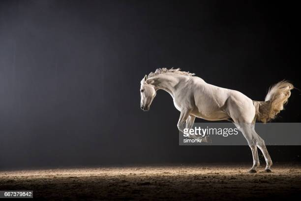 horse galloping - horses running stock pictures, royalty-free photos & images