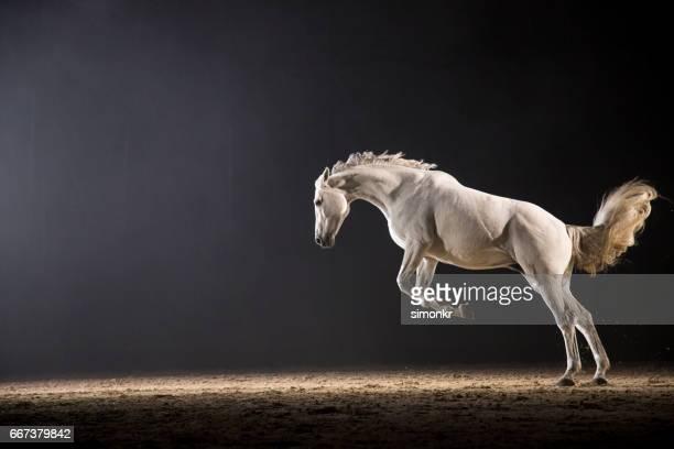 ホース galloping - 一匹 ストックフォトと画像