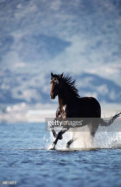Horse galloping through water