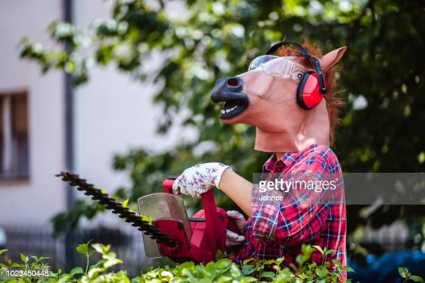 horse gardening - funny horses stock pictures, royalty-free photos & images