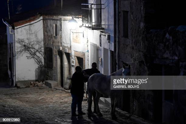 A horse gets ready in the village of San Bartolome de Pinares in the province of Avila ahead of the opening of the traditional religious festival...