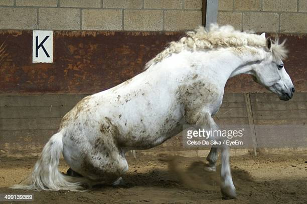 Horse gets up after rolling in the dirt