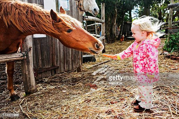 horse girl - girl blowing horse stock pictures, royalty-free photos & images