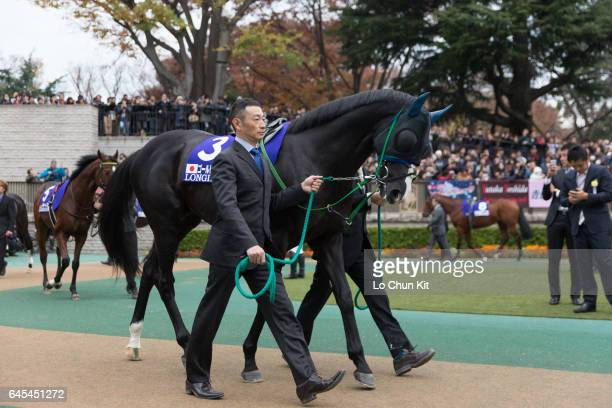 Horse Gold Actor being led around the paddock during the Japan Cup at Tokyo Racecourse on November 27 2016 in Tokyo Japan