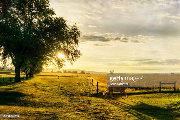 horse golden horse at sunrise