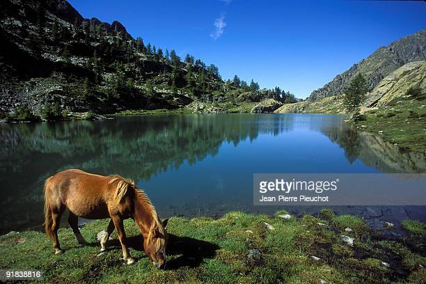 Horse grazing by lake in Mercantour National Park, France