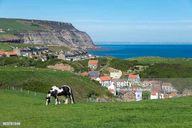 Horse grazing in field above Staithes, North Yorkshire, England