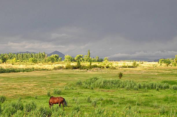 Horse Grazing In Field Wall Art