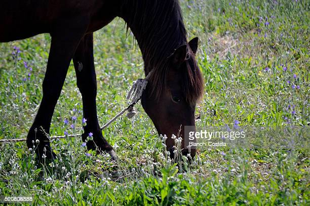 Horse grazing in the field in Spring