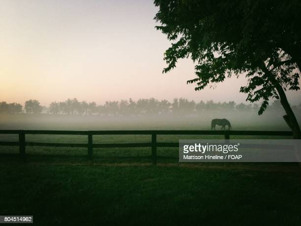 Horse grazing on farm in foggy weather