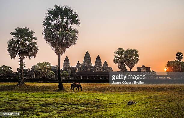 Horse Grazing On Field Against Angkor Wat During Sunrise