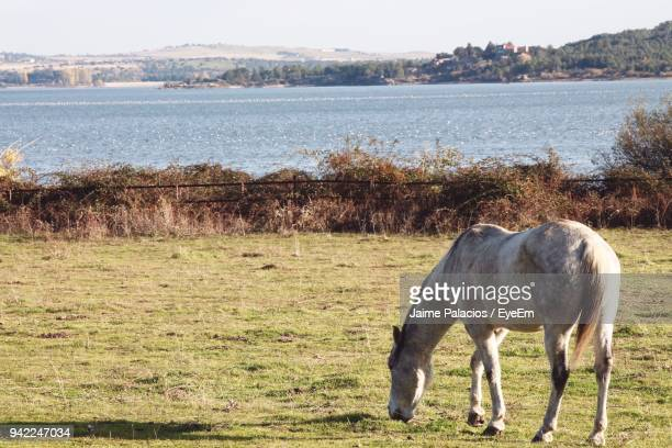 Horse Grazing On Field At Lake