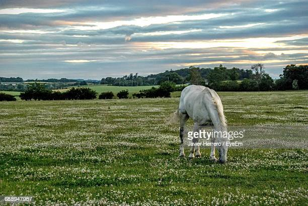Horse Grazing On Grassy Field Against Cloudy Sky