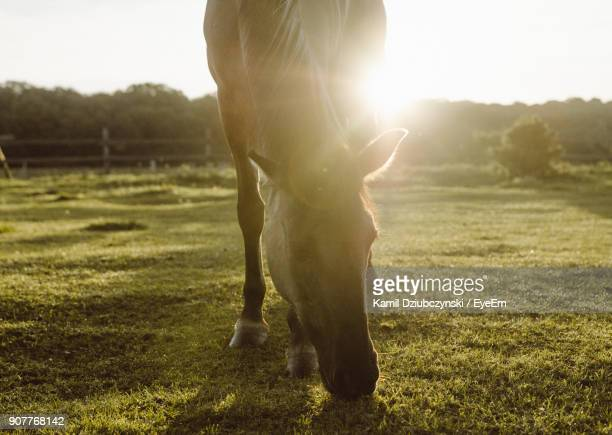 Horse Grazing On Grassy Field Against Sky During Sunny Day