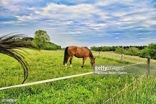Horse Grazing On Pasture Against Cloudy Sky