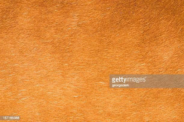 Horse Haar Hintergrund