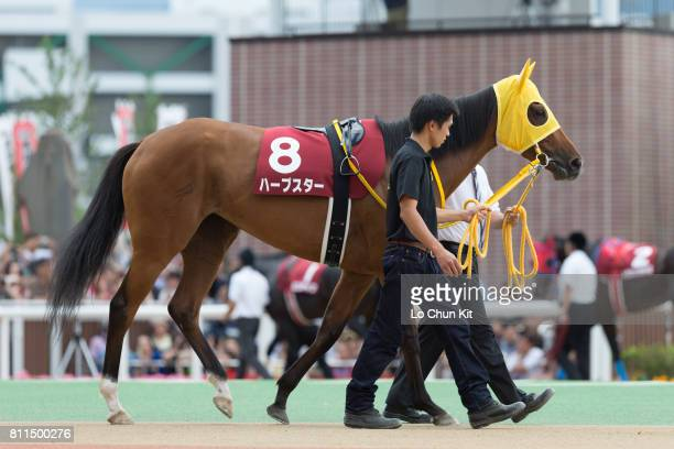 Horse Harp Star being led around the paddock during Race 11 Sapporo Kinen at Sapporo Racecourse on August 24 2014 in Sapporo Hokkaido Japan