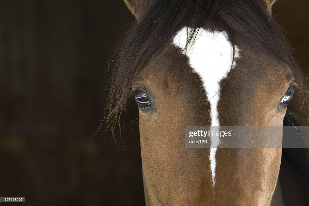 Horse Head : Stock Photo