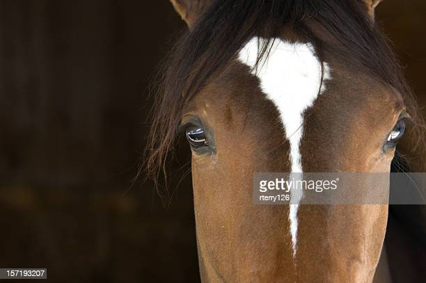 horse head - racehorse stock pictures, royalty-free photos & images