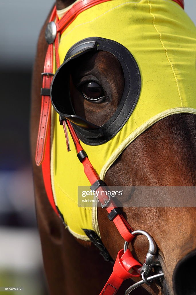 Horse head with Blinders : Stock Photo